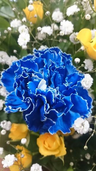 青のカーネーション