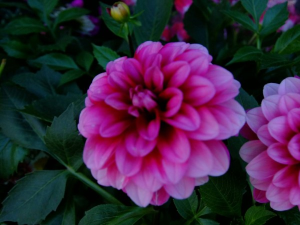 花のあみの5月のお花達